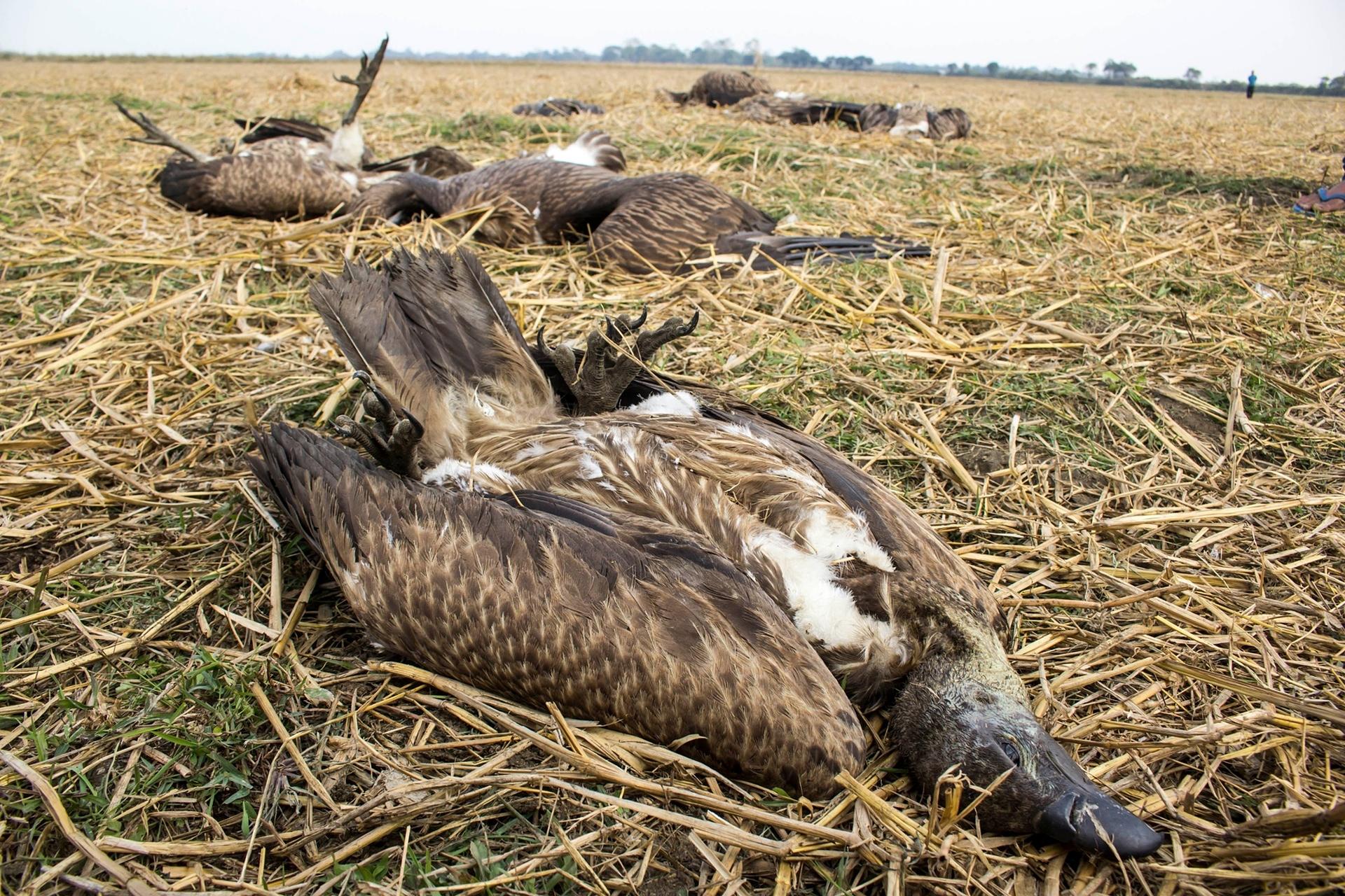 vultures2.jpeg