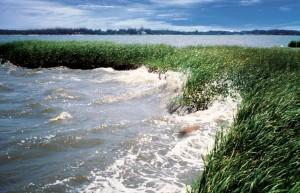 coastal_wetlands_large-e1337711139521.jpg