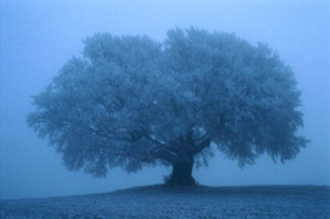 misty%20tree%20250.jpg