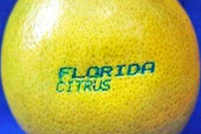 laser-grapefruit.jpg