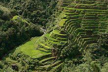 220px-Banaue_Rice_Terrace_Close_Up_2.jpg