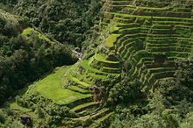 220px-Banaue_Rice_Terrace_Close_Up_2.jpg