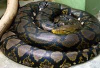 Python2.jpg
