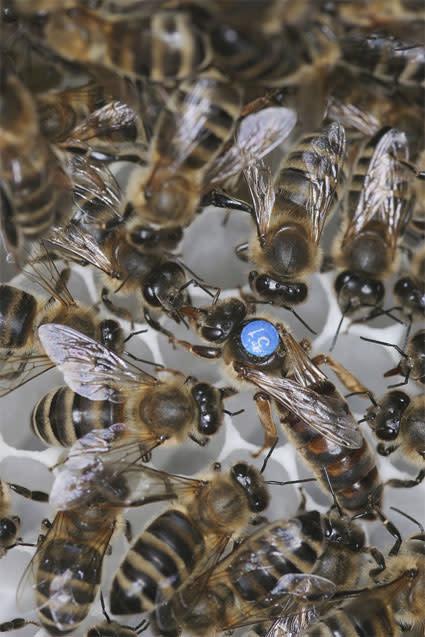 queenhoneybee.jpg