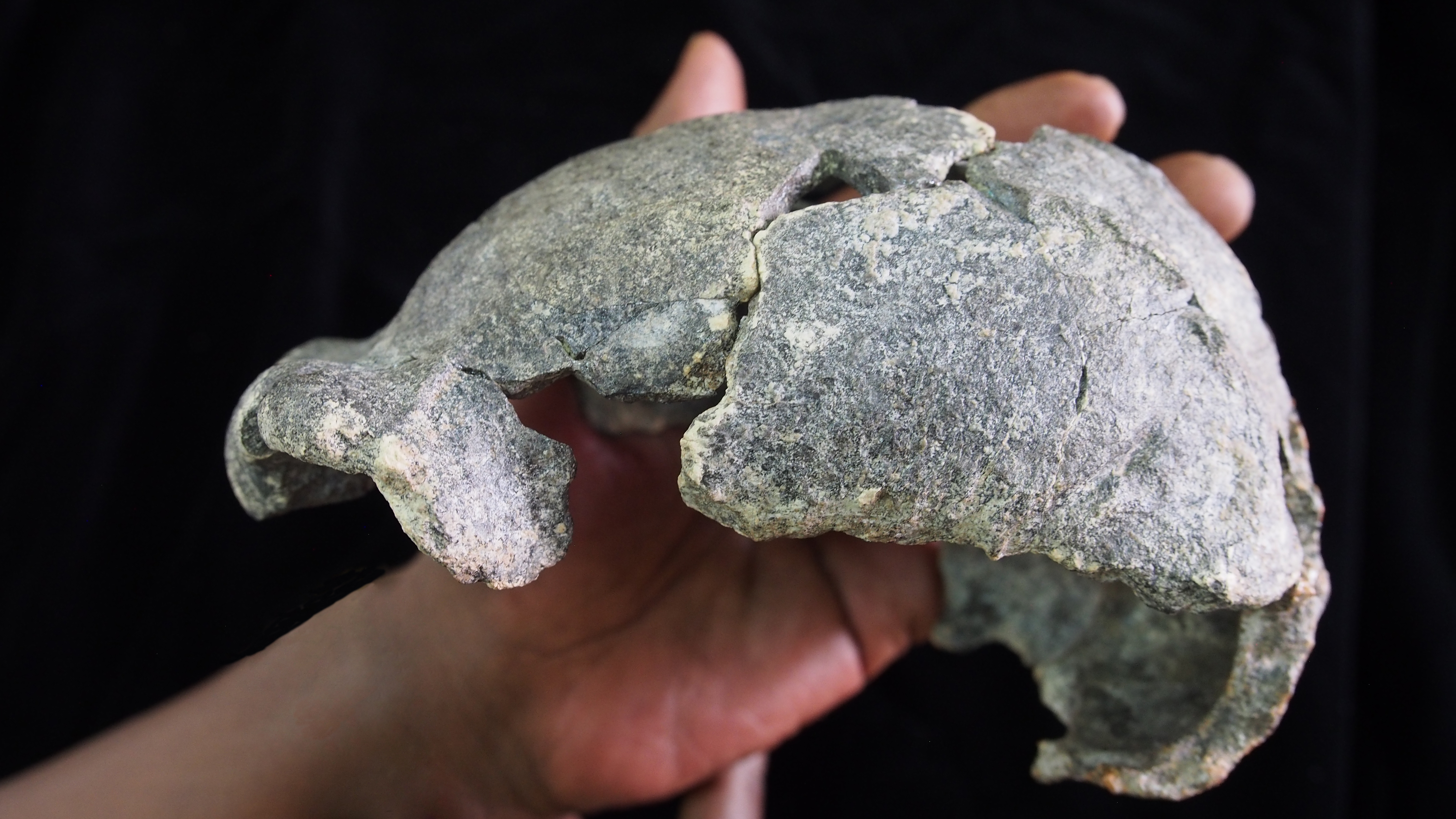 These Skulls From Ancient Humans Might Provide Clues About Early Mating Practices