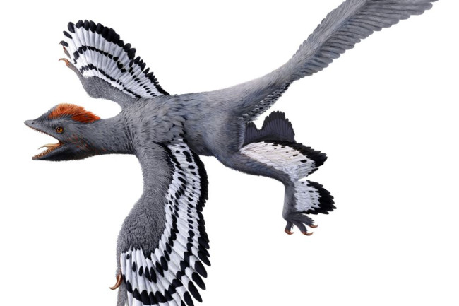 Anchiornis11.jpg