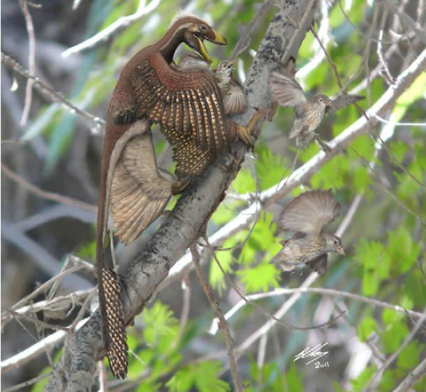 Microraptor_birds.jpg