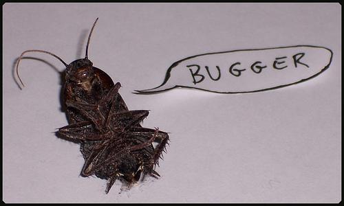 cockroach_image.jpg