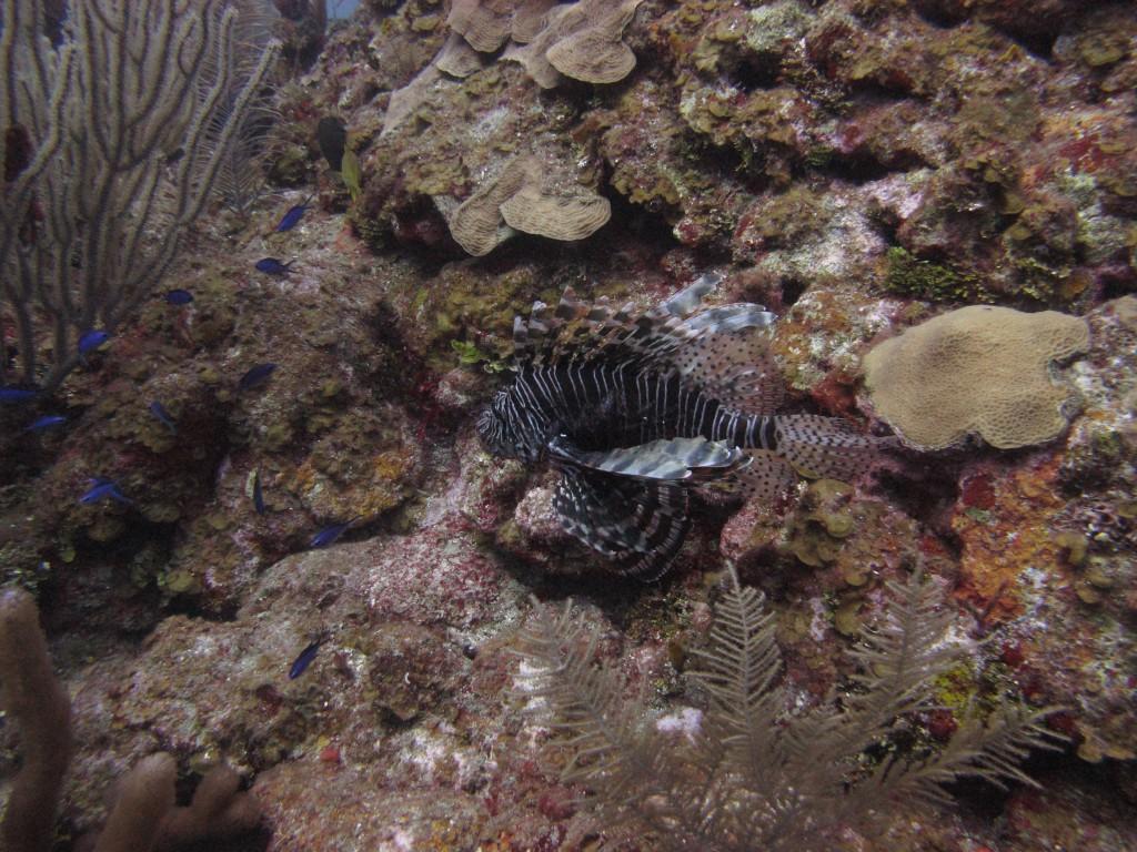 lionfish_fight_winner_alex_fogg-1024x768.jpg