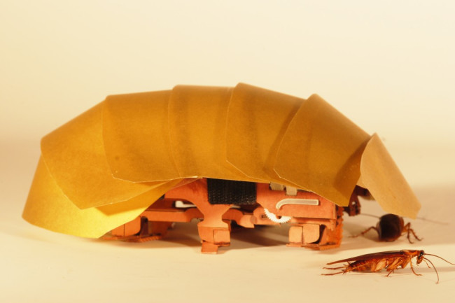 cockroach-1024x685.jpg