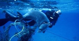 Plastic Pollution Marine Mammals - NOAA