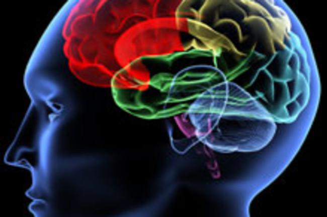brain-32.jpg