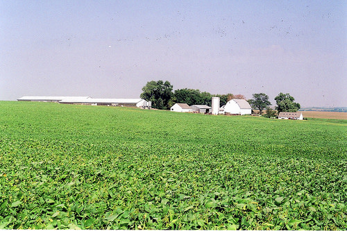 soybean-field.jpg