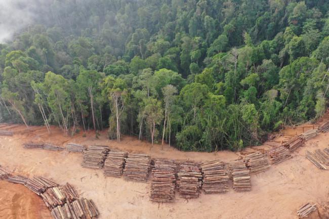 malaysia rainforest logging deforestation ecosystem - shutterstock