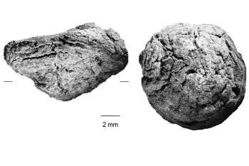 Humans Roasted Starchy Carbs 170,000 Years Ago