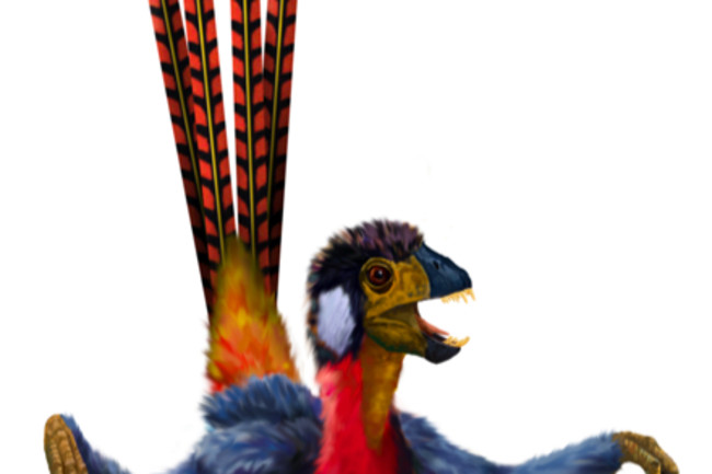 epidexipteryx440.jpg