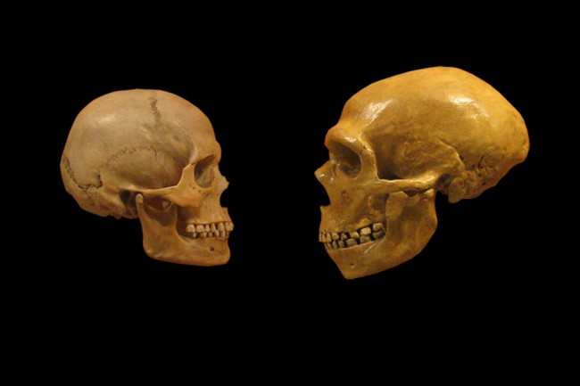 neanderthal-human-1024x666.jpg