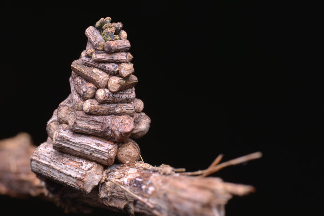 Bagworm-Log-Cabin