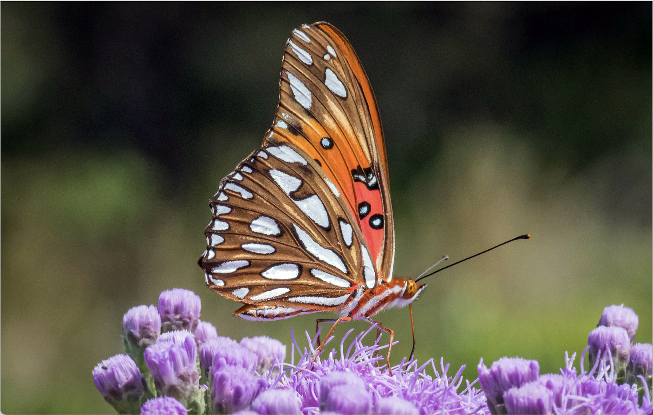 Pollinators Are in Trouble. Here's How Transforming Your Lawn Into a Native Wildflower Habitat Can Help