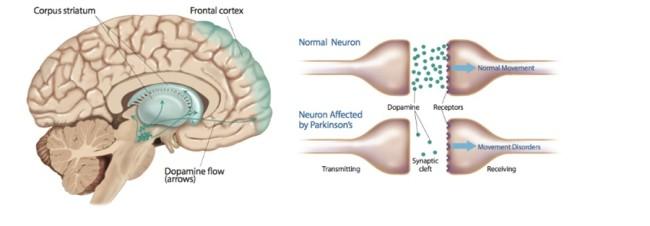 dopamine chart - ©2013 Delilah R. Cohn