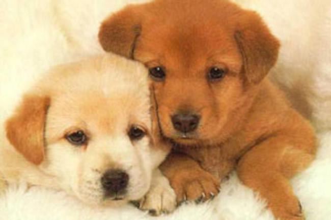puppies_1.jpg