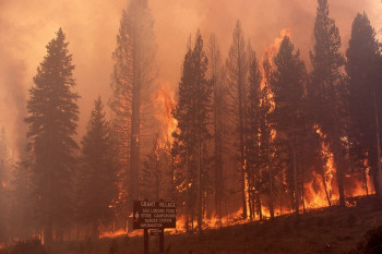 Wildfire Engulfed Yellowstone 30 Years Ago. Its Recovery Could Predict The Future of the West