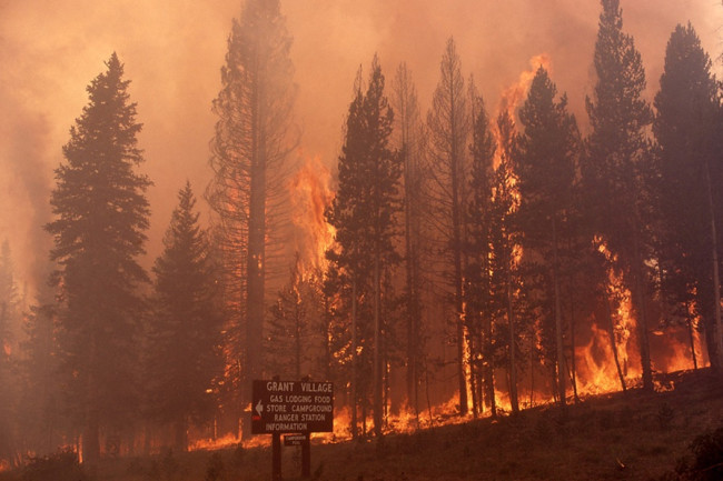 Yellowstone Fire - National Park Service