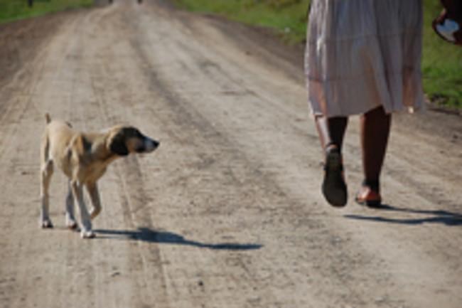 stray-dog.jpg