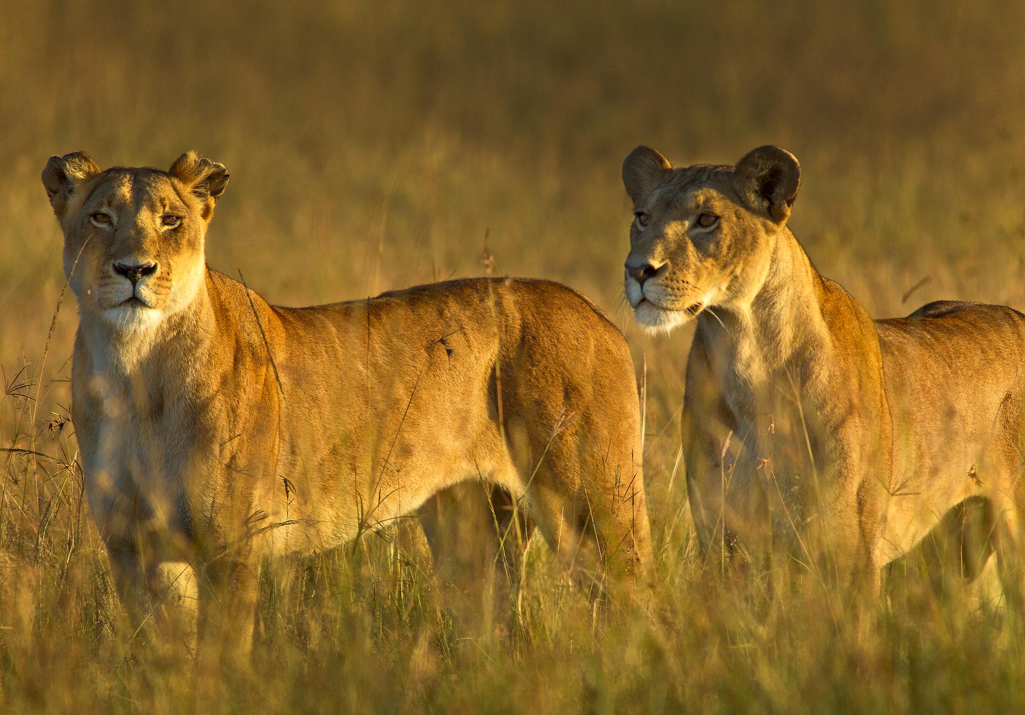 Studying Man Studying Animals Comparing Behavior