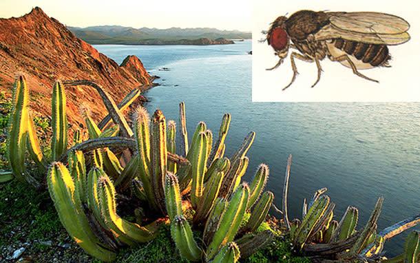Fly_Cactus.jpg