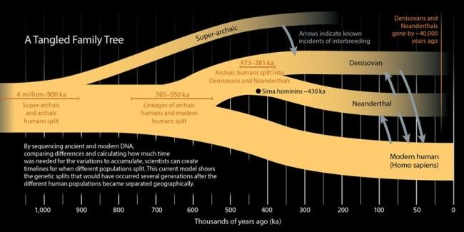 Denisovan family tree - Mackey/Discover