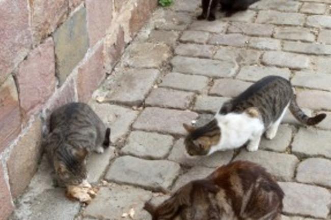 cats-288x300.jpg