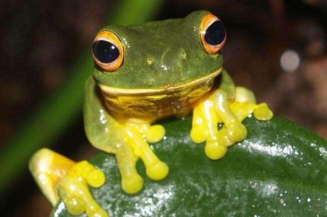 tropical_frog.jpg
