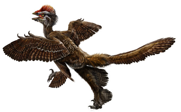 Feathered-dinosaur-Anchio-0091.jpg