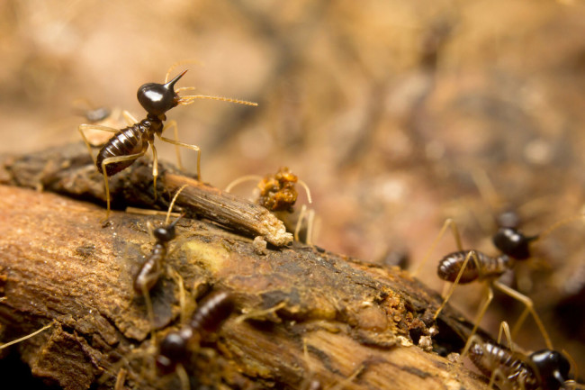 TermitesRainforestFloor.jpg