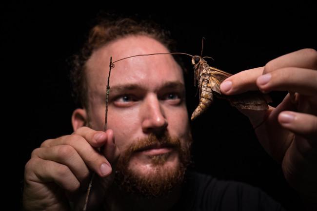 Giant Sphinx Moth