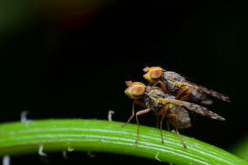 It's Not Just You: Fruit Flies Also Base Their Dating Habits Off Of Their Peers