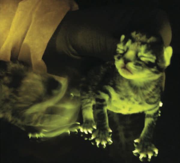 green-kitten1.jpg