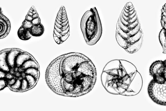 Foraminifera - USGS