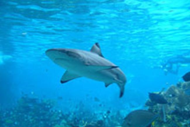 sharkweb.jpg