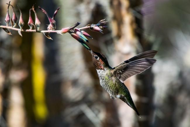 Hummingbird_feeding-1024x684.jpg