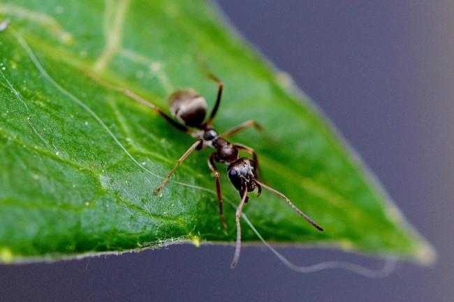 ant-771071_960_720.jpg