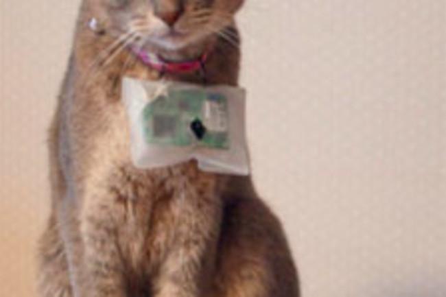 cat@log-twitter-per-gatti.jpg