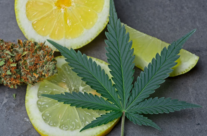 What Are Cannabis Terpenes and What Do They Do? | Discover Magazine