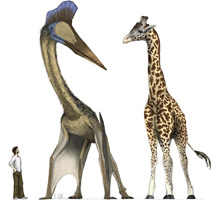 pterosaur-and-giraffe.jpg