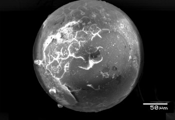 Strange Glass Spheres Found in Ancient Florida Clams Point to Meteor Strike