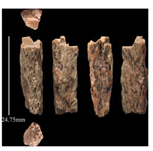 Denisova Bone Fragments - Max Planck Institute