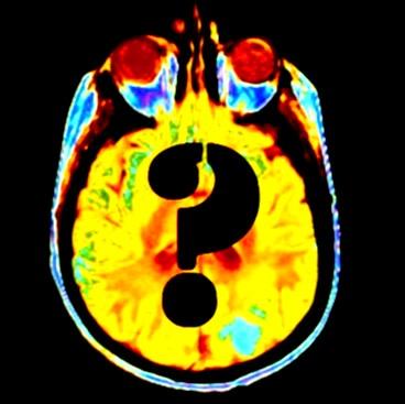 brainquest1.jpg