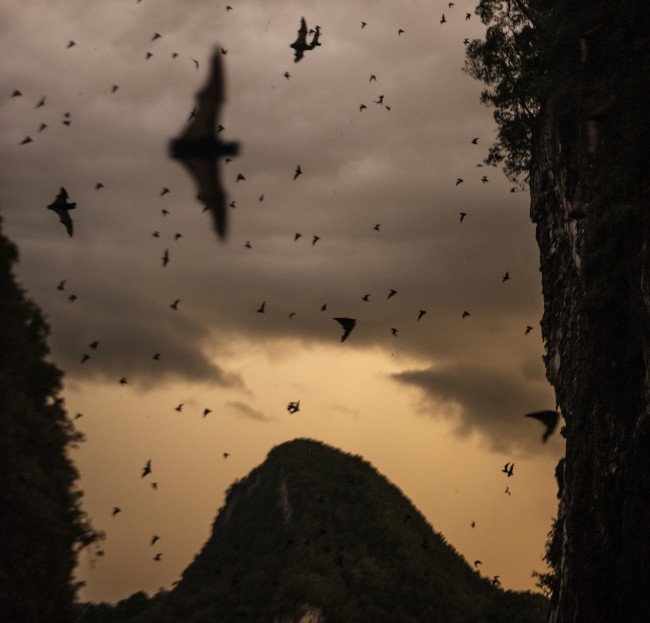 """Bats and birds are common reservoirs for viruses that can """"spill over"""" to people—often during encounters in the wild. (Credit: NatGeo/Carsten Peter)"""