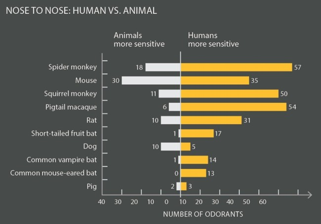 human versus animal nose chart - Alison Mackey/Discover